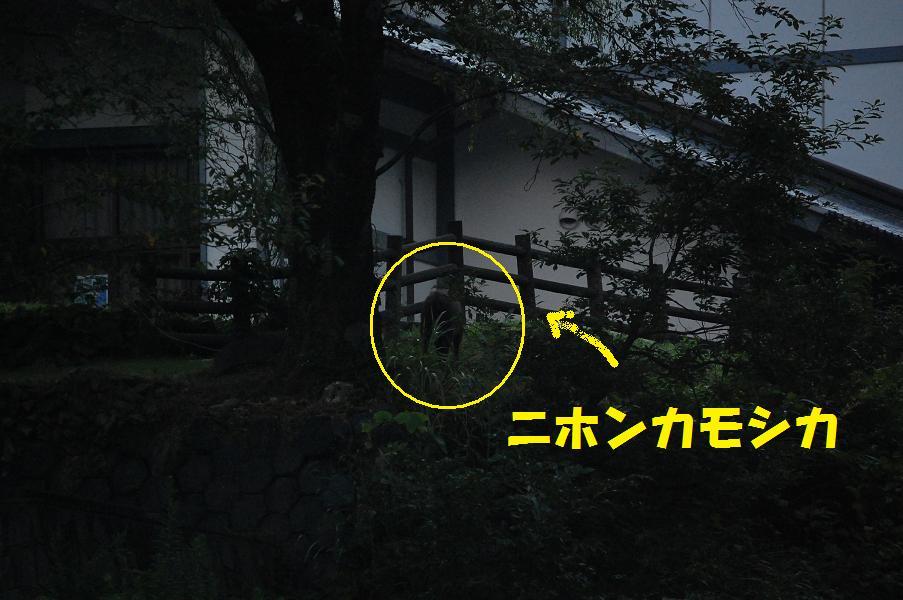b0059978_20104677.jpg