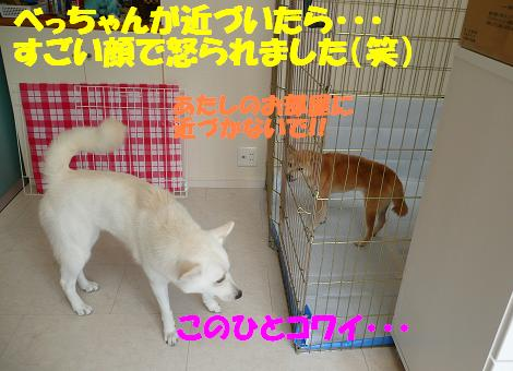 f0121712_8565122.jpg
