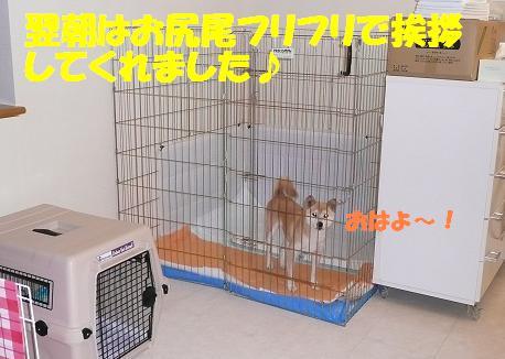 f0121712_911857.jpg