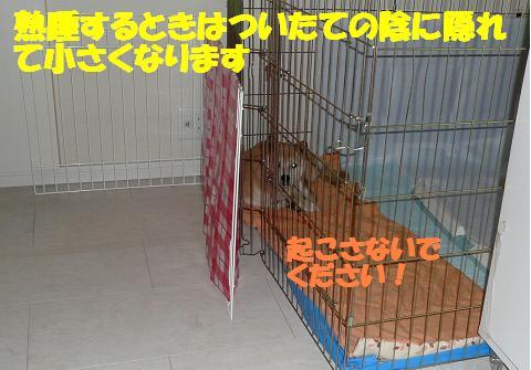 f0121712_939778.jpg