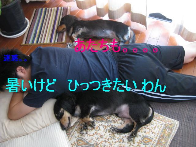 b0181341_10462816.jpg
