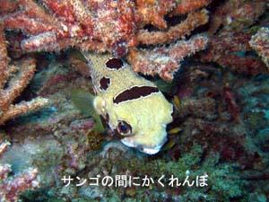 ラチャヤイ島で体験&ファンダイビング_f0144385_22161091.jpg