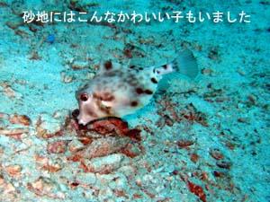 ラチャヤイ島で体験&ファンダイビング_f0144385_22163266.jpg