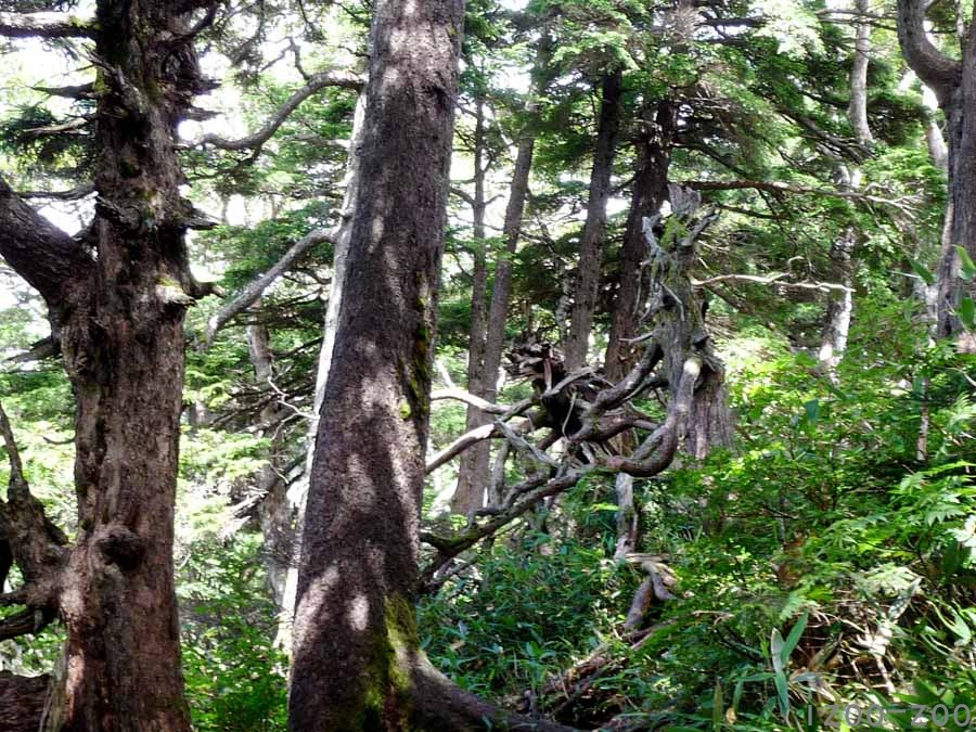 山、登りました〜_c0223095_1626957.jpg