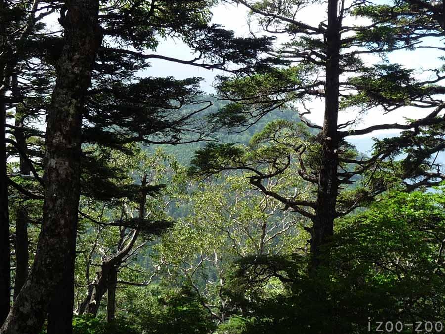 山、登りました〜_c0223095_1630373.jpg