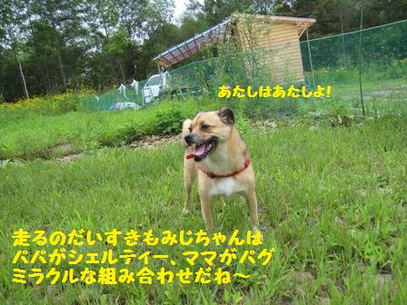 f0212597_1642525.jpg