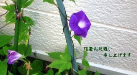 f0166704_1644378.jpg