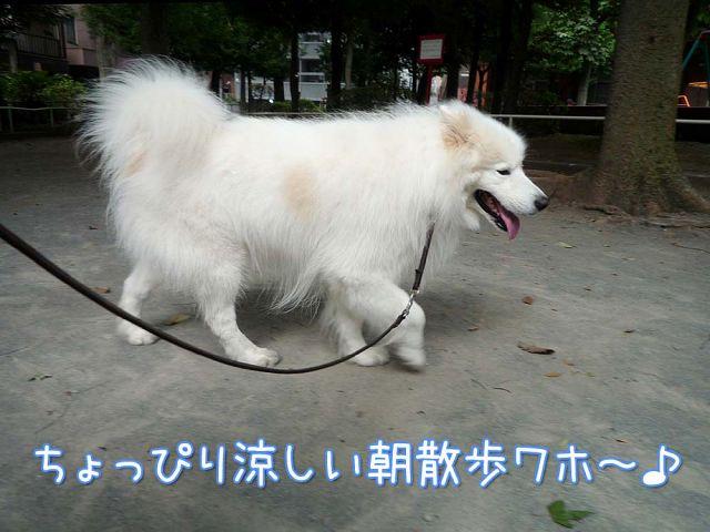 朝のお散歩で_c0062832_17122933.jpg