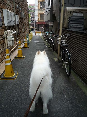 朝のお散歩で_c0062832_17124923.jpg