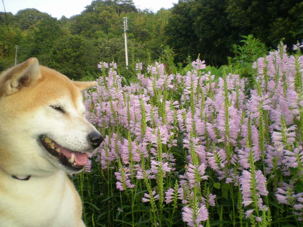 2010年8月24日(火)海と子供と子犬!_f0060461_9105191.jpg