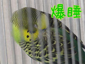 f0196665_003636.jpg