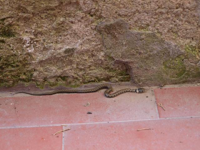 びびっくり!!赤ちゃん蛇を発見!!_c0179785_6221663.jpg