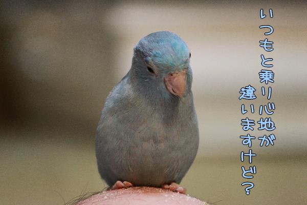 b0062090_1125444.jpg