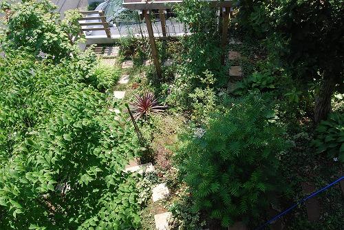 8月の庭…_c0124100_23331876.jpg