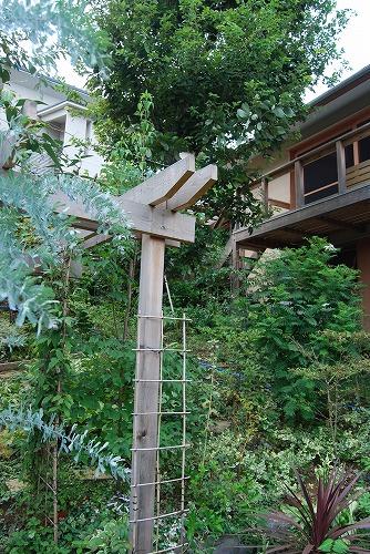 8月の庭…_c0124100_23332960.jpg