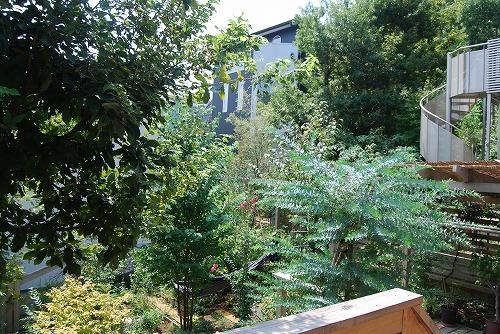 8月の庭…_c0124100_23335368.jpg
