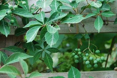 8月の庭…_c0124100_23451553.jpg