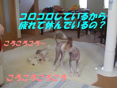 f0179203_17415443.jpg