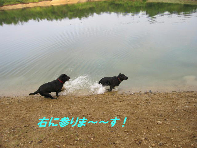 d0081210_1201851.jpg
