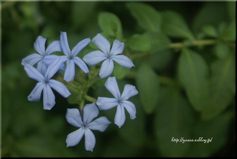 紫色の花_f0156117_1863356.jpg