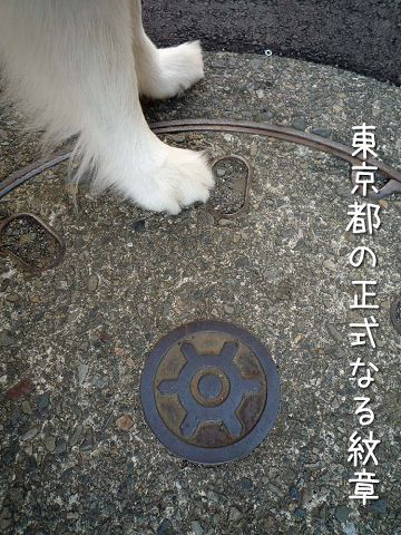下を向いて歩こう_c0062832_18362613.jpg