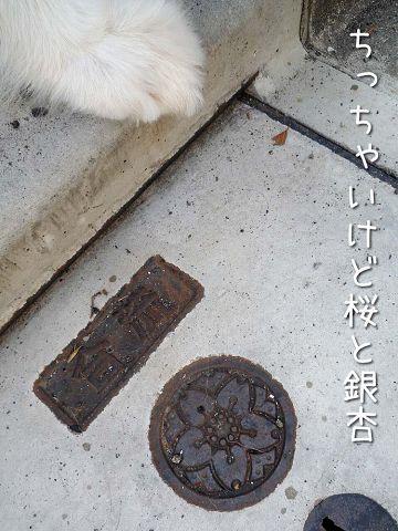 下を向いて歩こう_c0062832_18363826.jpg