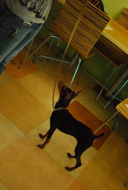 大事な子犬の時期_c0099133_10201355.jpg