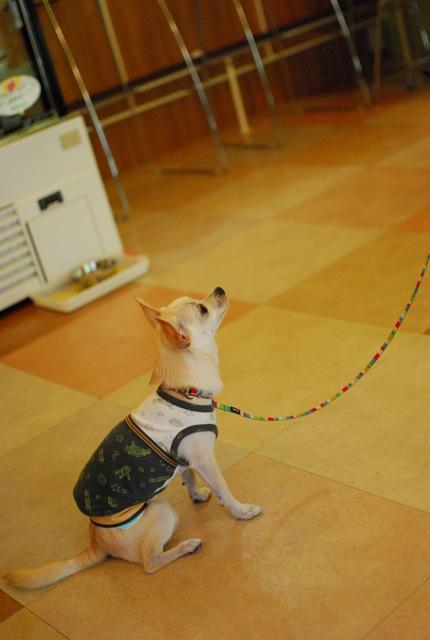 大事な子犬の時期_c0099133_10203182.jpg
