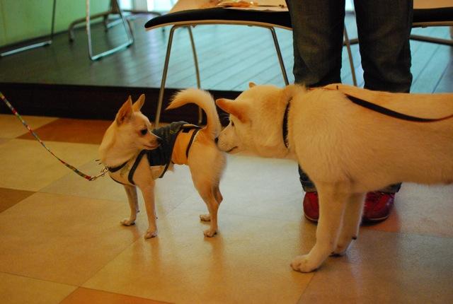 大事な子犬の時期_c0099133_10204410.jpg