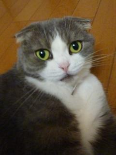 猫のお友だち ペロちゃん編。_a0143140_2351620.jpg