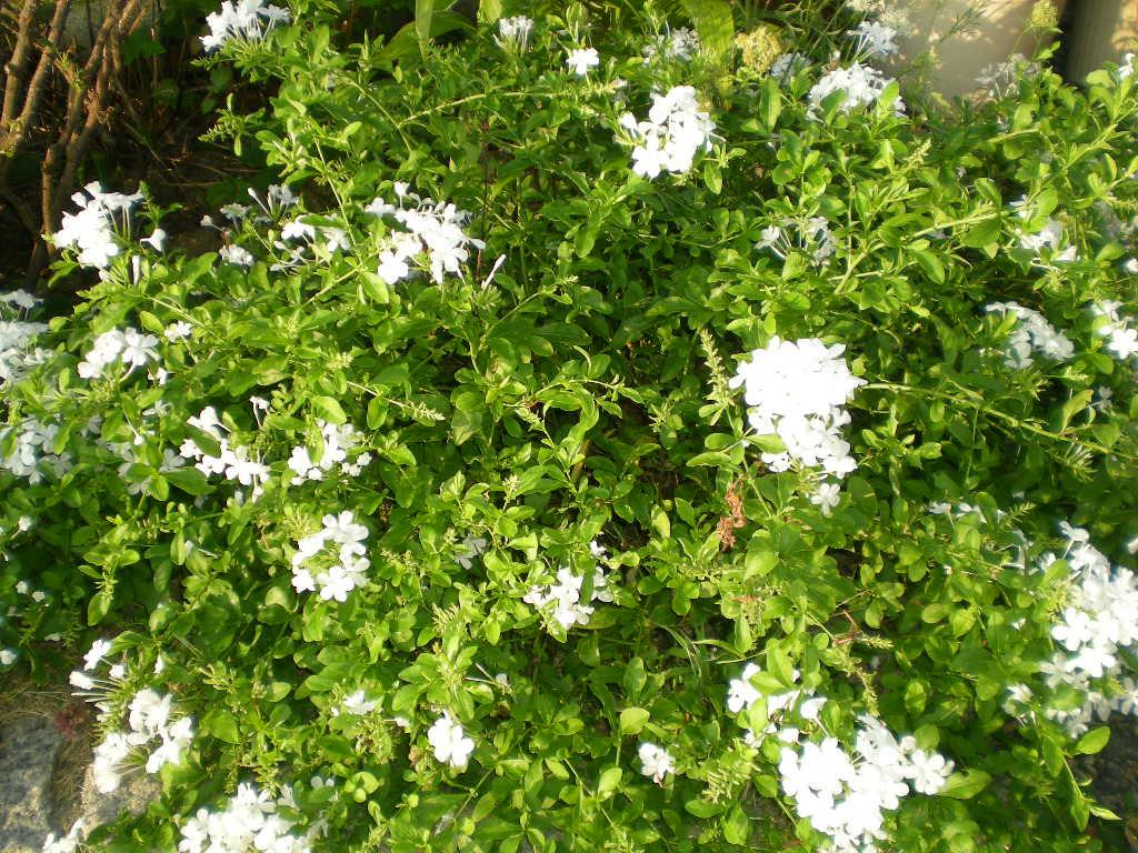 2010年8月25日(水)今日の収穫!_f0060461_1013762.jpg