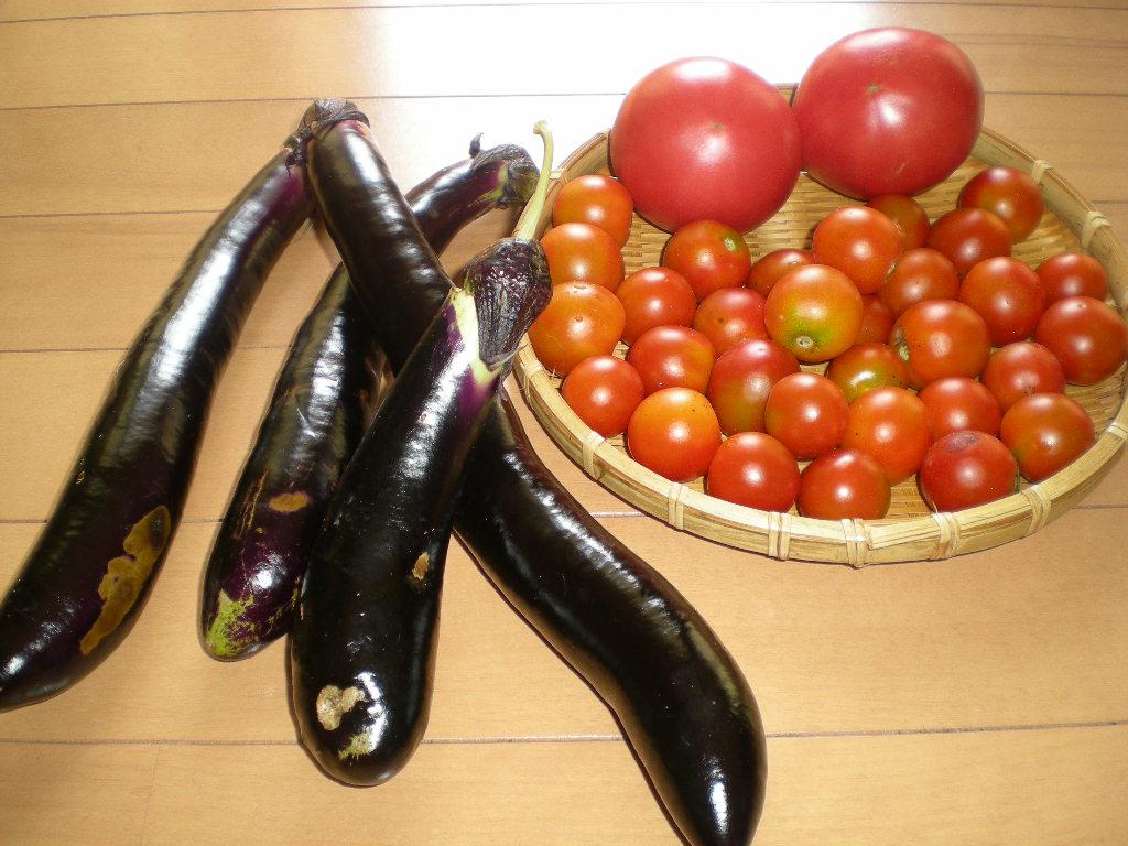 2010年8月25日(水)今日の収穫!_f0060461_1052065.jpg