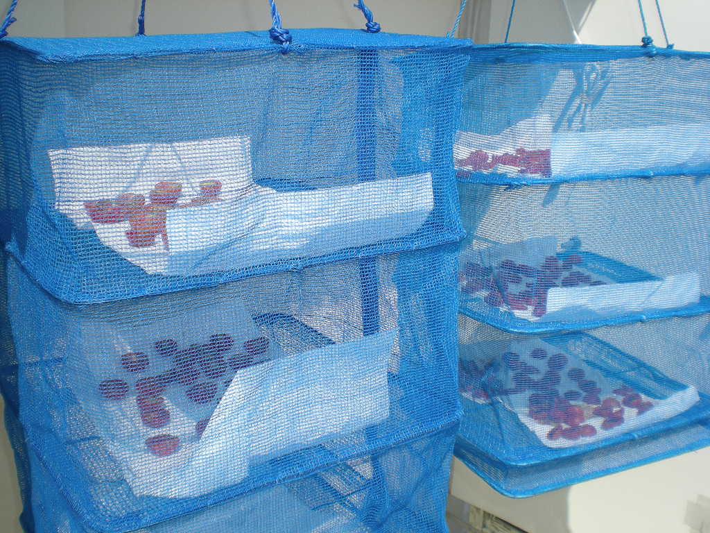 2010年8月25日(水)今日の収穫!_f0060461_1072575.jpg