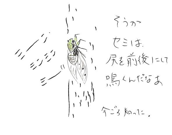 いきもの_f0072976_9171137.jpg