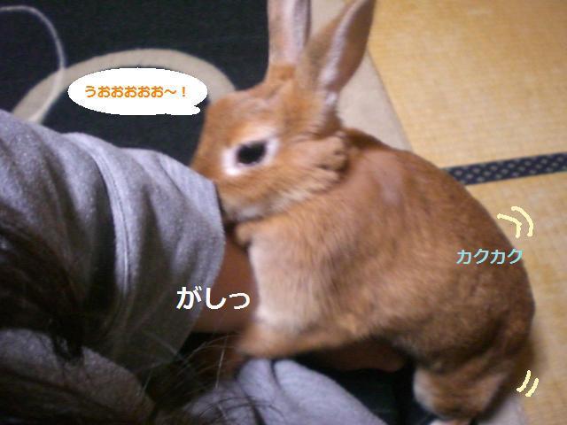 d0134977_1618711.jpg
