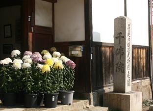 中将姫と當麻寺 (三)_a0045381_23424696.jpg