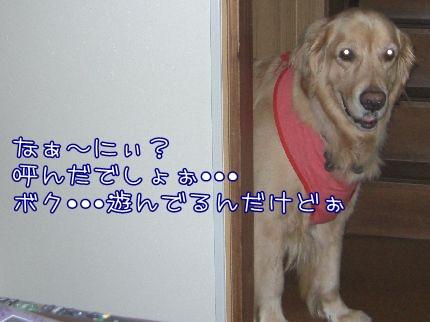 c0107886_2146190.jpg