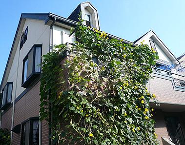 ご近所の緑のカーテン_d0020309_856816.jpg