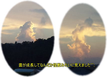 d0070316_1735977.jpg