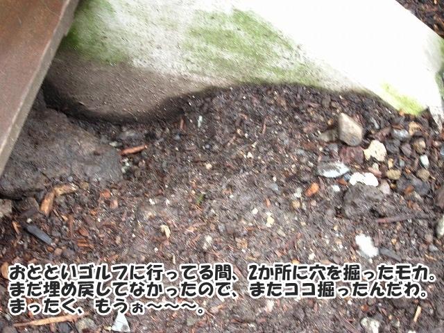 ココ掘れワンワン♪_e0192217_852409.jpg