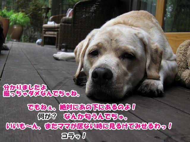 ココ掘れワンワン♪_e0192217_85731.jpg