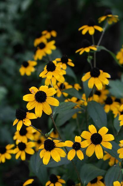 庭の花便り_d0150720_9503488.jpg