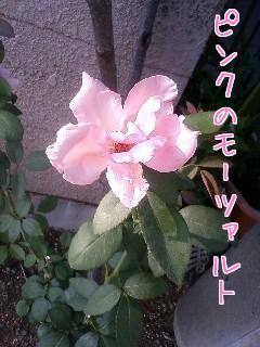 f0070628_0333774.jpg