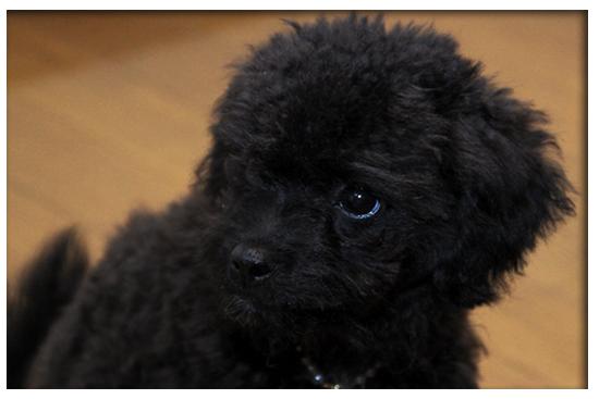 仔犬ちゃん of the Day♪ Vol. 5_e0166336_19124377.jpg