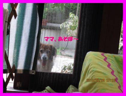 b0198549_2173263.jpg