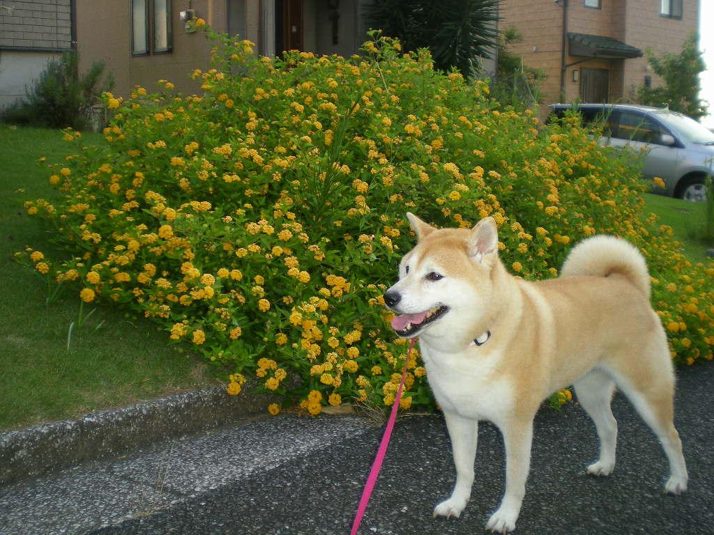 2010年8月26日(木)ドライトマトのその後!_f0060461_10113686.jpg