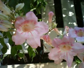 夏の花_b0011075_15304718.jpg