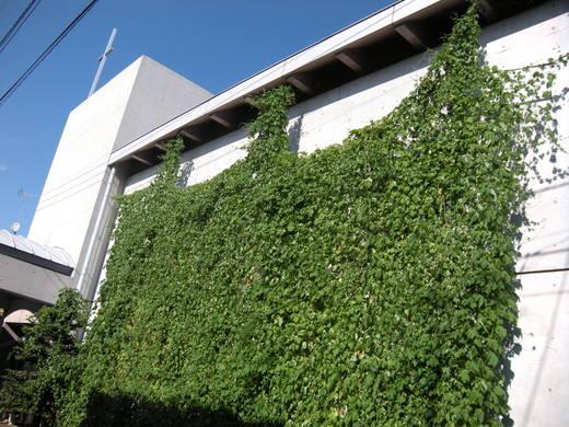グリーンなカーテン_c0128489_2350385.jpg