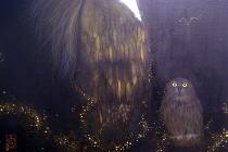 東京アンデパンダン展2010@COEXIST~光彩陸離by臼田うたび/かとうみぞれ展@CRUX kafeo_f0006713_2141667.jpg