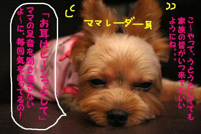 b0130018_18494354.jpg